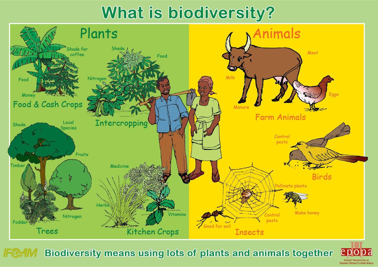 Essay on biodiversity