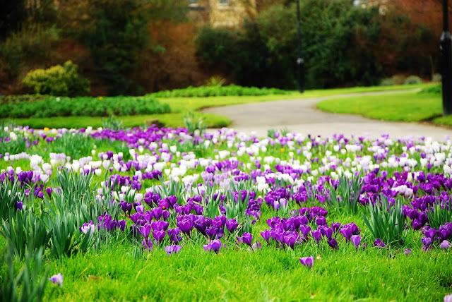 Sheffield spring
