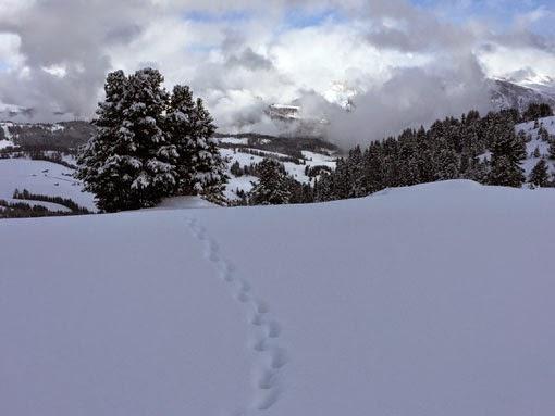 Spuren im Schnee Seiser Alm