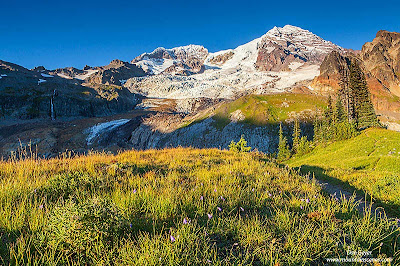 Mount Rainier from Emerald Ridge in evening light, Mount Rainier National Park, Cascade Range, Washington, USA.