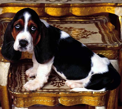 Cutest Dog Breeds In The World Bassets