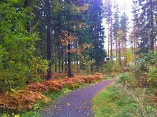 ما هو سبب تغير ألوان ورق الأشجار في فضل الخريف - autumn