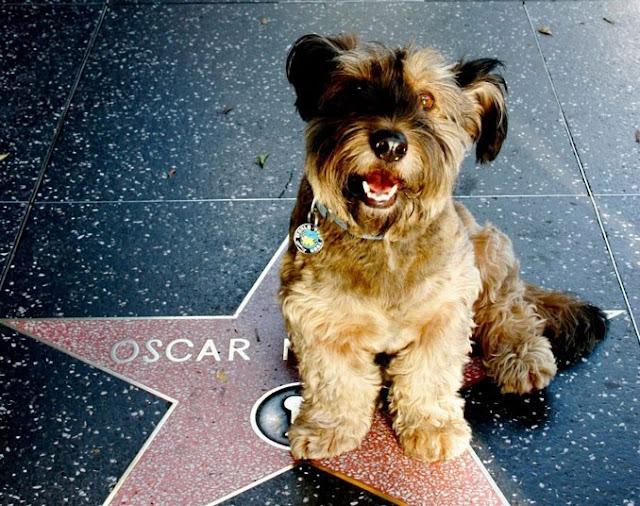 Muere Oscar, el perro viajero