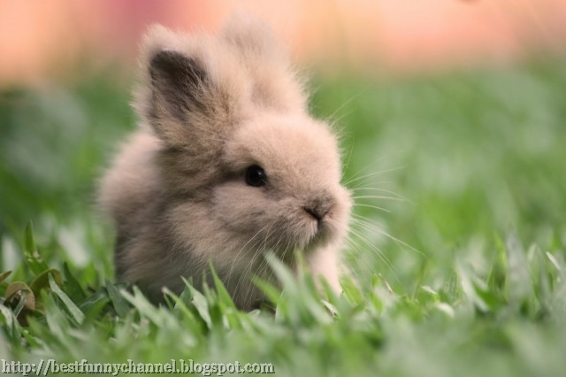Very small bunny.