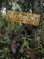 Jungle Trek 3, Cameron Highlands