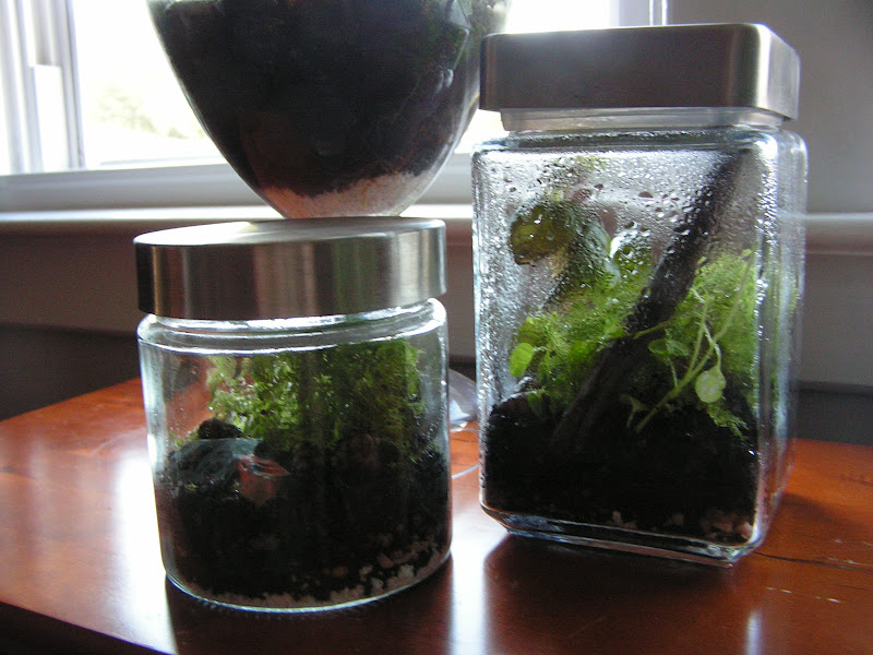 Life And Other Projects The Terrarium Multiplier