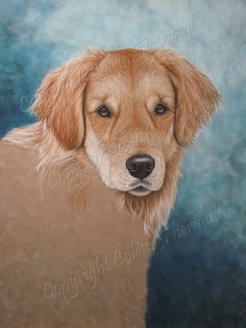 painting progress of golden retriever by pet portrait artist Colette Theriault