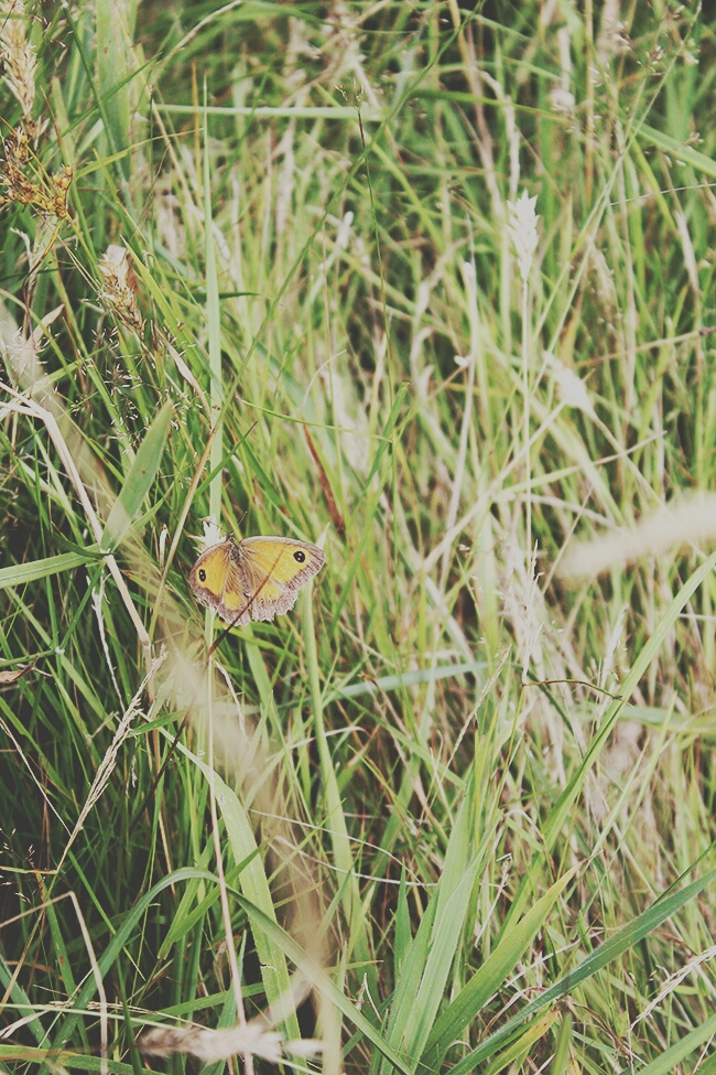 butterfly-forest-tall-grass-ringwood-forest-summer-story-todaymyway