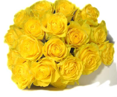 yellow roses flowers