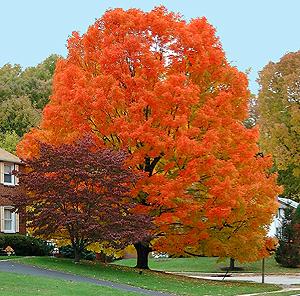 Best 25  Autumn color palette ideas on Pinterest   Fall color ...