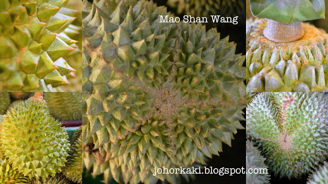 Mao-Shan-Wang-MSW-Musang-King-Durian-猫山王
