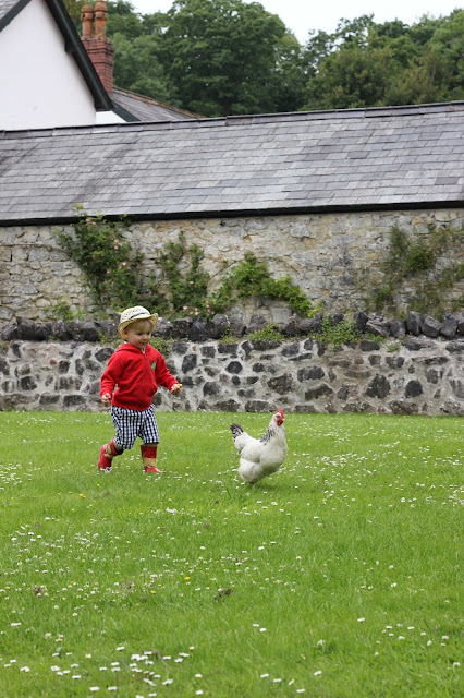 toddler chasing chicken
