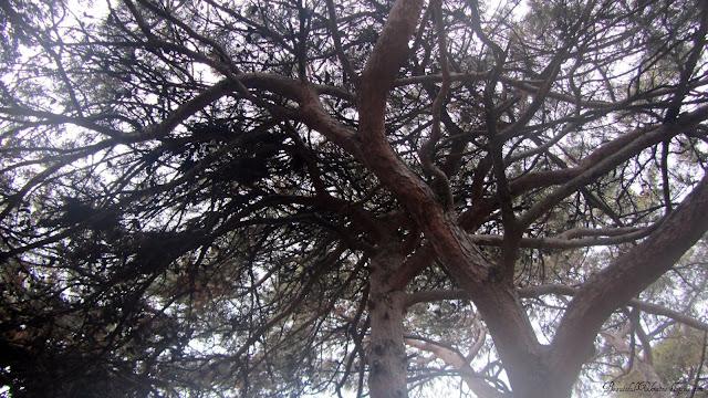 Крона деревьев. Центральный парк Форос