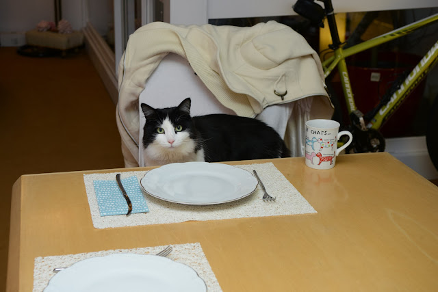 cat at the table.