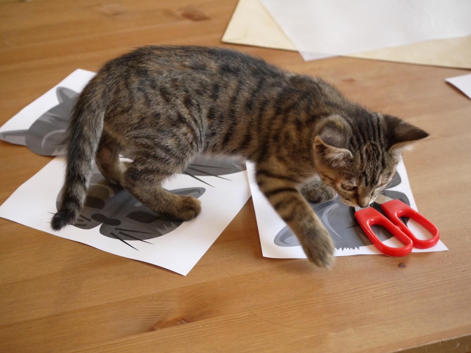 chat ciseaux