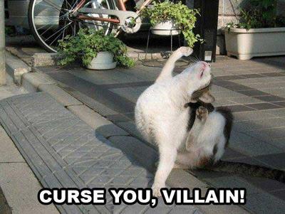 lol cat no