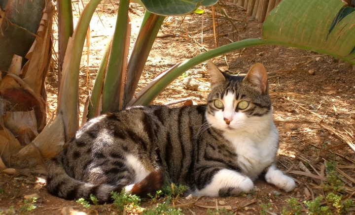 cute cyprus cats