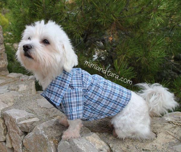 Canine Design Collars Site Etsy Com