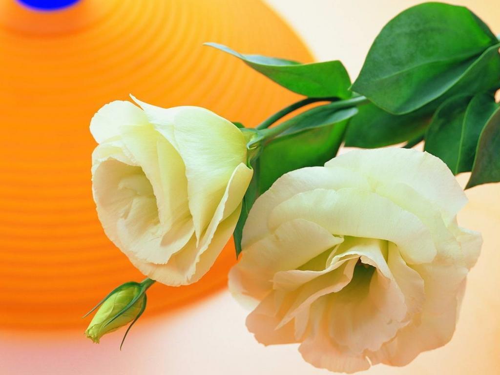 http://3.bp.blogspot.com/-kTY8Tn2NRwc/UDEadq3VXcI/AAAAAAAAQ2I/EB79wb7M9dk/s1600/Flowers+desktop+wallpapers.+(4).jpg