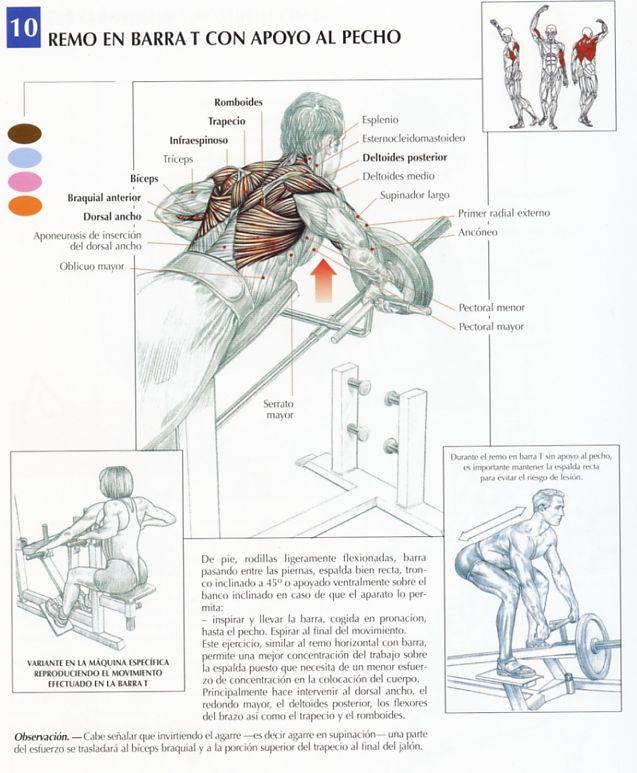 maximizador de musculos somanabolico pdf