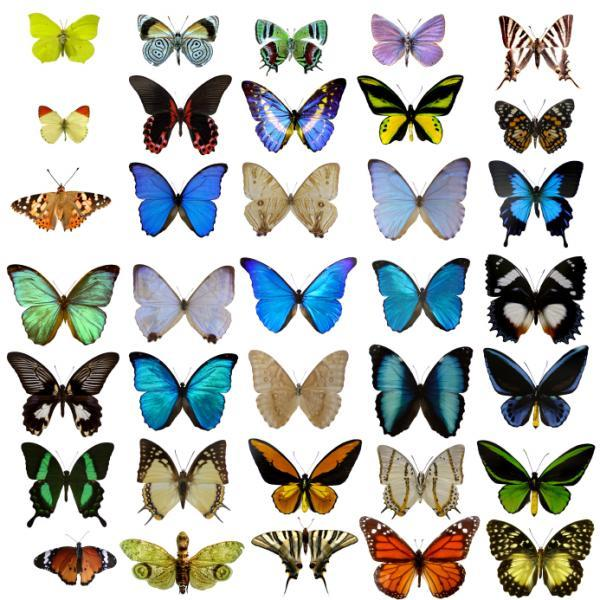 anyway the two kinds of color are reflected in that photo you heard that right the two kinds of color - Butterflies To Color 2