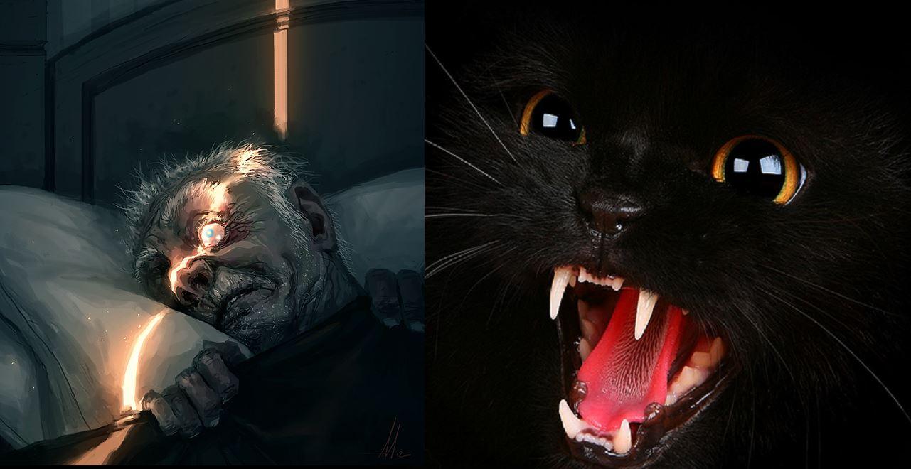 cat human anime