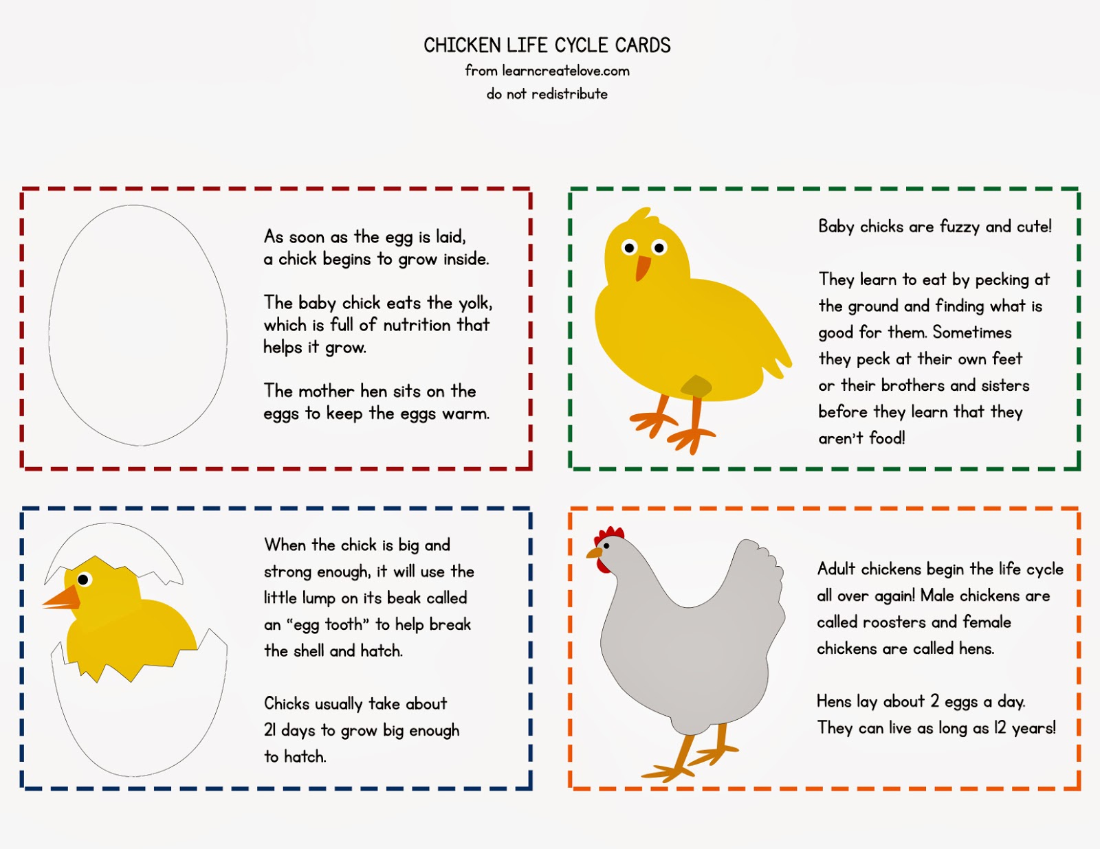 Uncategorized Chicken Life Cycle Worksheet hd wallpapers chicken life cycle worksheets for kids wallpaper get free high quality kids