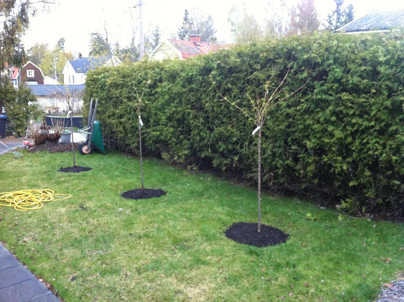Njut i din trädgård: plantera mera!