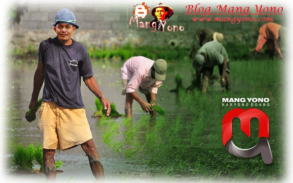 Tandur - Pria ikut menanam padi siapa takut