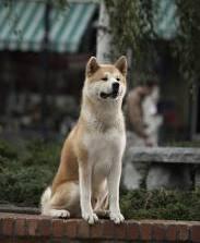 Hachiko, anjing setia versi film
