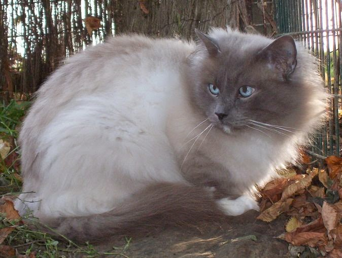 Cat Attacks Other Cat Litter Box