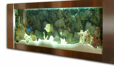 The best saltwater fish tank for beginners for Above water fish tank