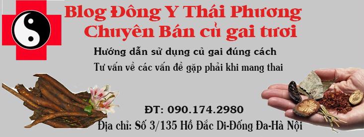 Bán Củ Gai Tươi Giúp An Thai và Chữa Động Thai