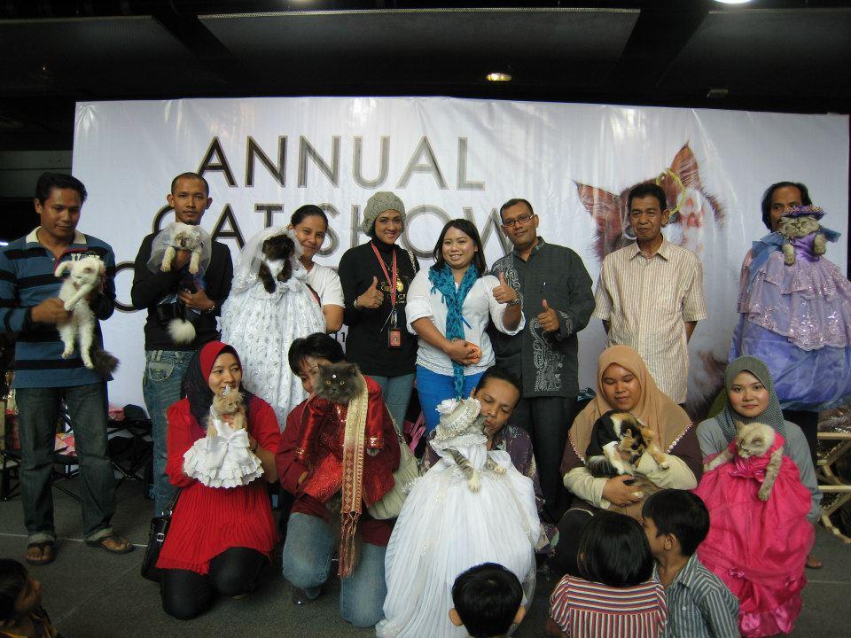Kucing Ras Asli Indonesia Seluk Beluk Mengenai Kucing