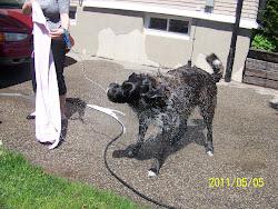 My Dog Bruce