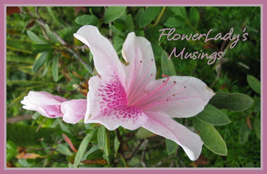 FlowerLady's Musings