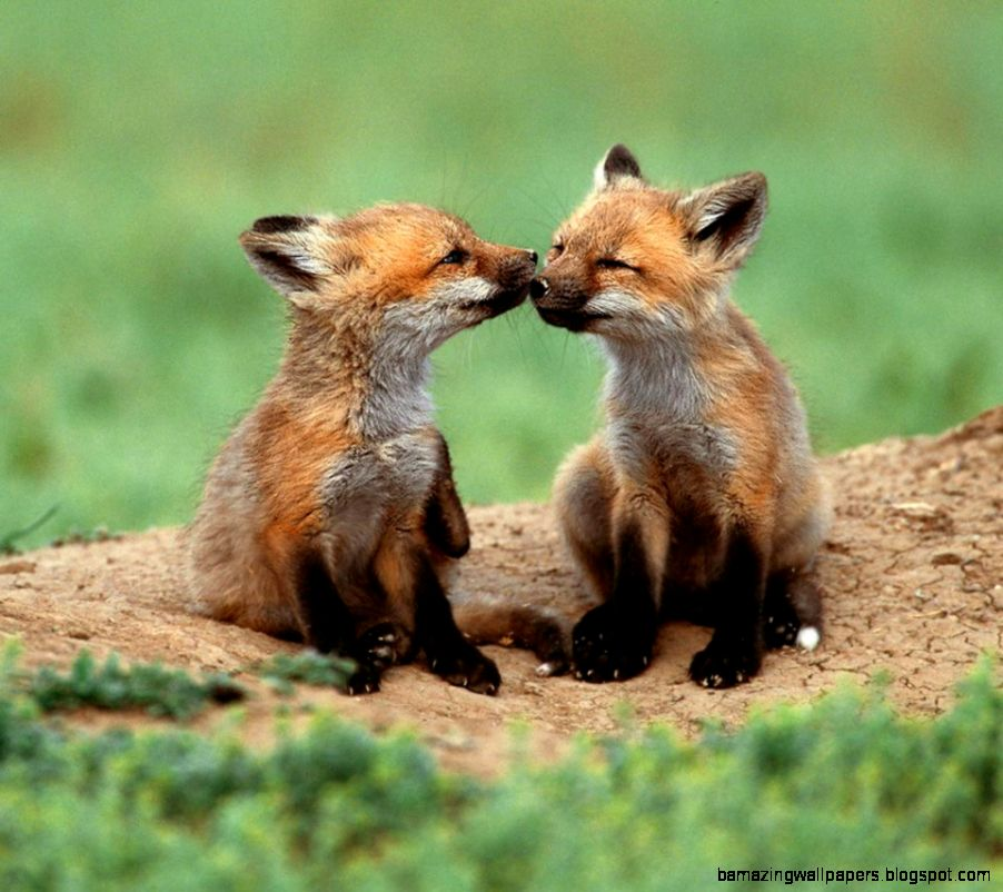 Love among animals   Flikie Wallpapers