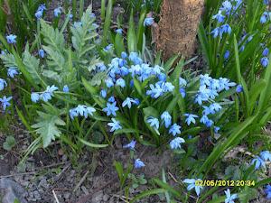 Ota yhteyttä ja tilaa puutarhapalvelua@gmail.com
