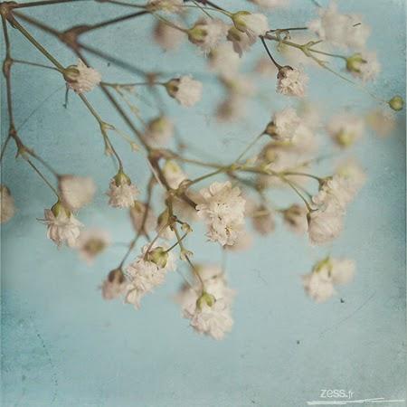 http://www.zess.fr/douces-fleurs/