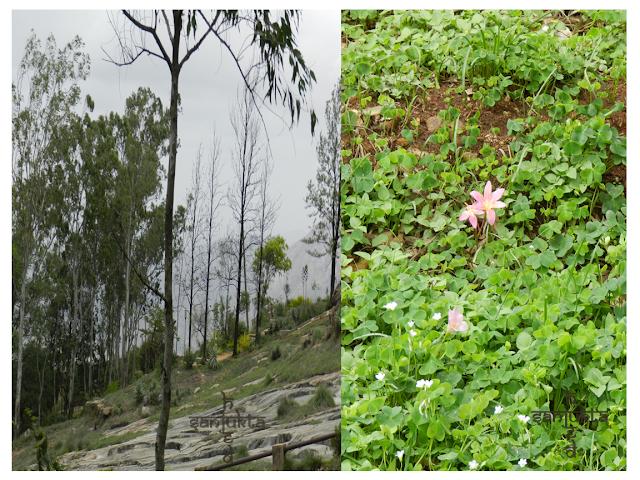hued, Nandi Hills