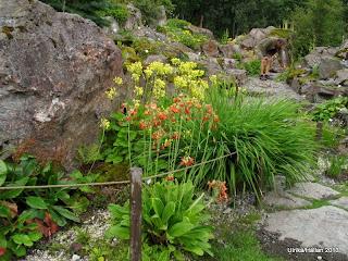 Klipparti, Tromsö botaniska