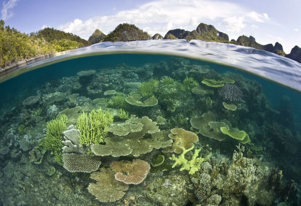 Photograph by Raja Ampat, Papua corals marine biodiversity, National Geographic