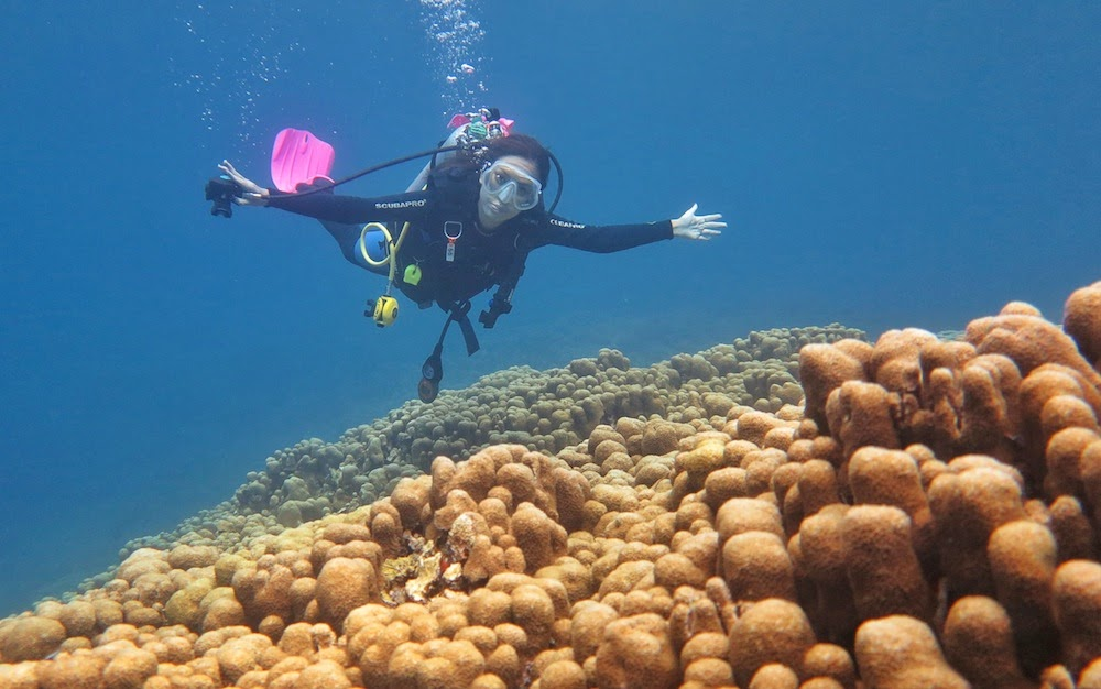"<a href=""http://mataram.info/things-to-do-in-bali/visitindonesia-banda-marine-life-the-paradise-of-diving-topographic-point-inward-fundamental-maluku/"">Indonesia</a>best destinations : Lukisan Salvador Dali Di Perairan Gorontalo"