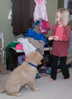 "An almost-five-year-old blond headed girl (my niece Zoey) holds a fistful of kibble. She just figured out that ""Dtuz"" will sit on her command. Dutch, a fuzzy 10-week-old Golden Retriever sits in front of her looking up in anticipation. Behind them are coats in a pile and hanging on hooks belonging to family members who came to the cookie bake."