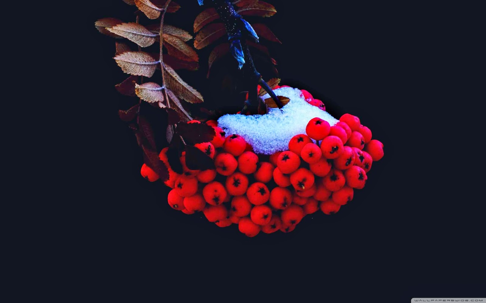 small red berries wallpaper