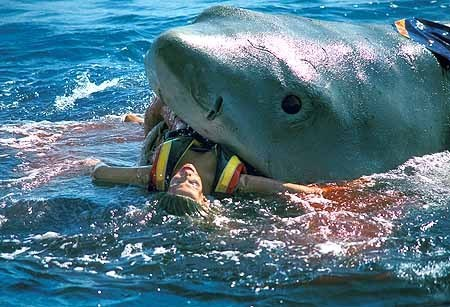 Jim Broach January 31, 1994 Tiger shark Killed while surfing at
