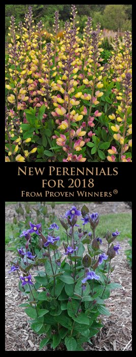 New Perennials from Proven Winners