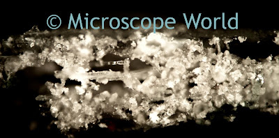 metallurgical microscope image
