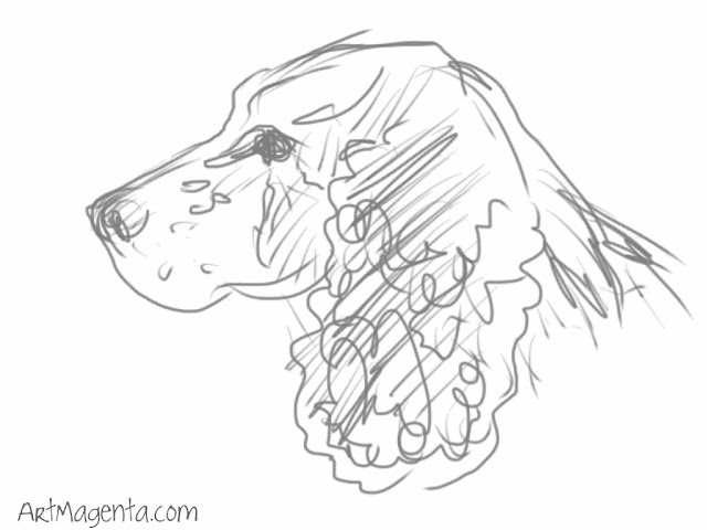 Springer Spaniel. Sketch by ArtMagenta