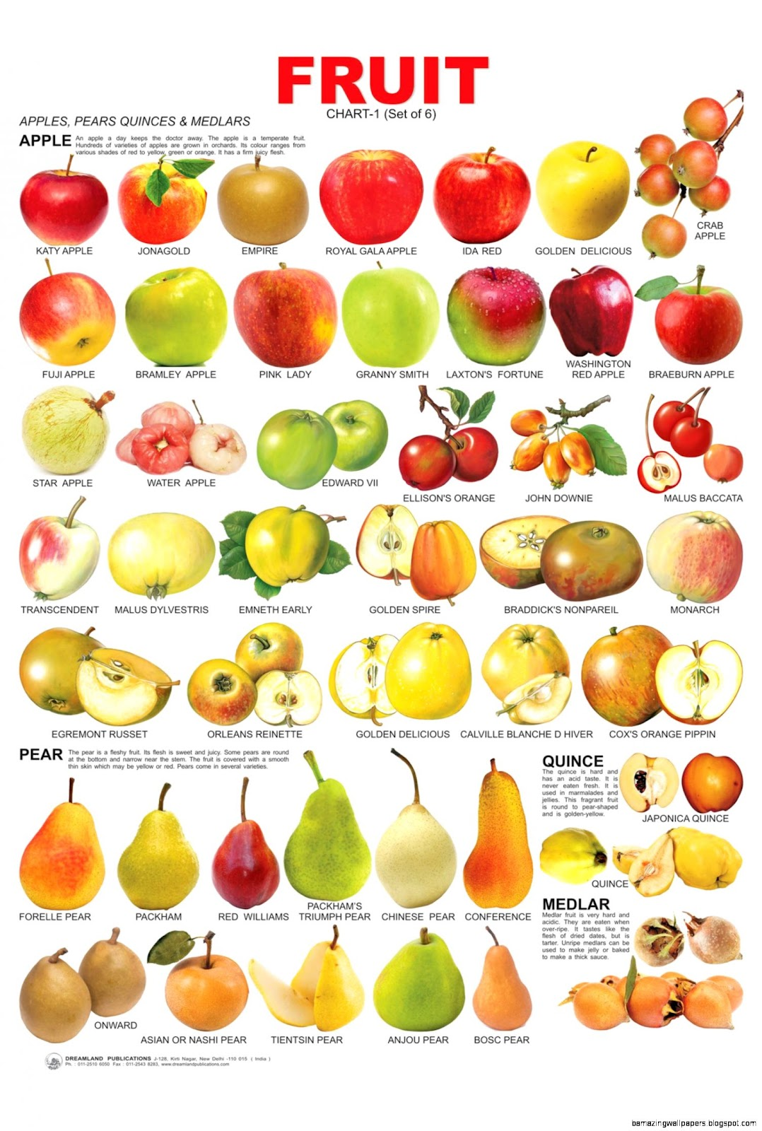 Name All Fruits Chart